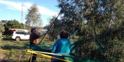 Patroni Olive Farm