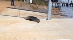 Walpole - seal