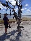 A Shoe tree